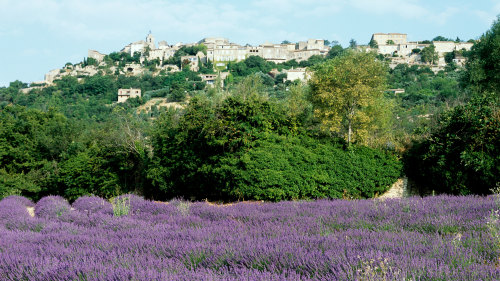 Aix-en-Provence & Lavender Fields Full-Day Tour