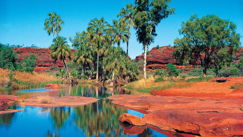 Palm Valley Outback Safari 4x4 Day Tour by AAT Kings