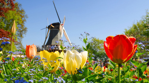 Keukenhof Gardens Entry & Transportation by Lindbergh Tour and Travel