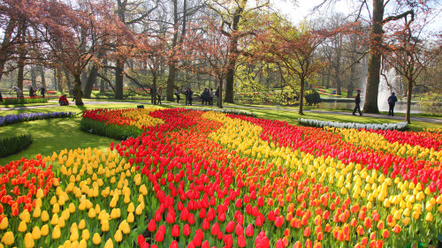 Combo Saver: City Sightseeing & Keukenhof with Tulip Farm Visit