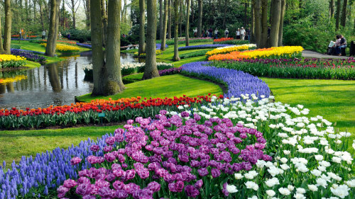 Skip-the-Line Private Keukenhof Gardens Tour