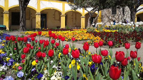 Van Gogh in Provence Half-Day Tour