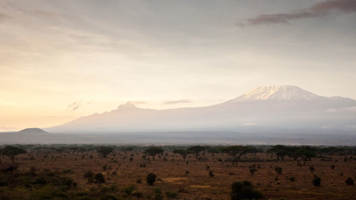 Mount Kilimanjaro Full-Day Hike with Lunch