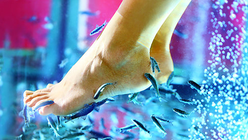 Ultimate Natural Pedicure with Exotic Fish by Athens Fish Spa