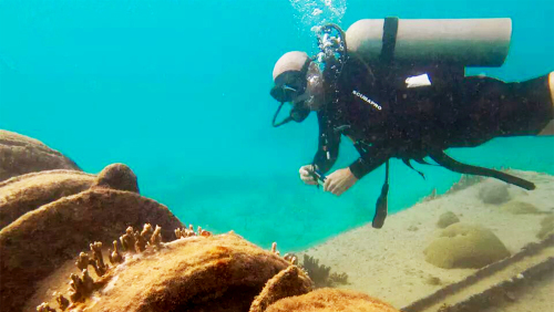 Certified Scuba Diving Adventure