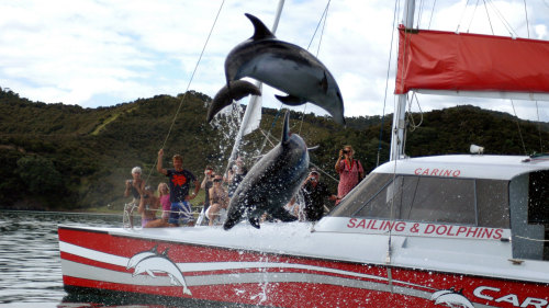 Bay of Islands Sailing & Dolphin Adventure