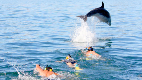 Swim with the Dolphins Cruise by Explore Group Limited