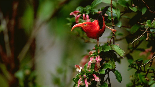 Rainforest & Dry Forest Birding Adventure