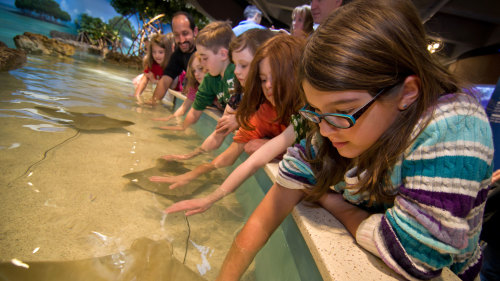 New England Aquarium & Simons IMAX® Theater