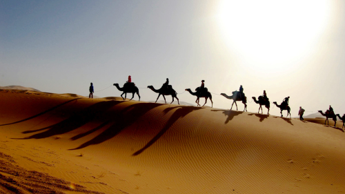 Pre-Saharan Dunes & Massa Nature Reserve Mini Safari with Lunch