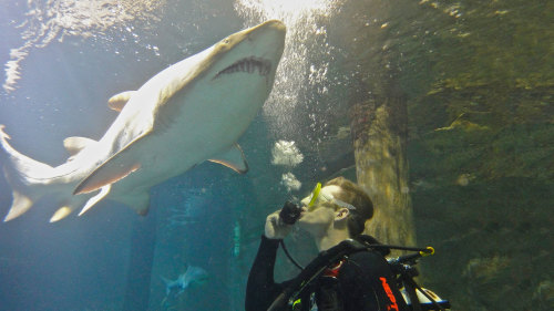 UnderWater World Shark Dive