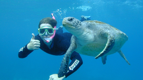 Sea Turtle Snorkeling Tour by Byron Bay Dive Center
