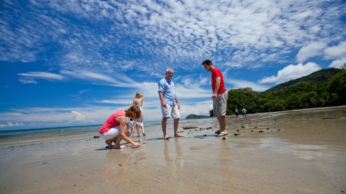Daintree Rainforest & Cape Tribulation Day Tour by Down Under Tours