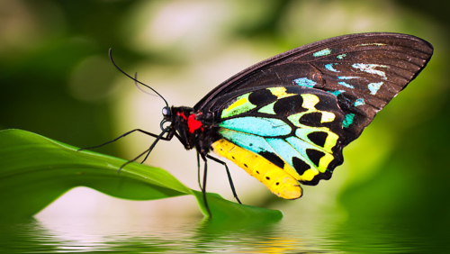Australian Butterfly Sanctuary Admission