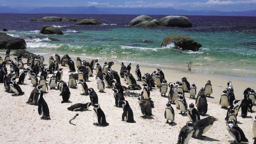 Cape Highlights Full-Day Tour