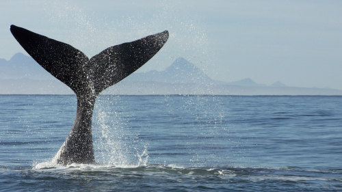 Whale Watching Full-Day Tour