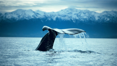 Full-Day Kaikoura Whale-Watching Tour by Canterbury Leisure Tours