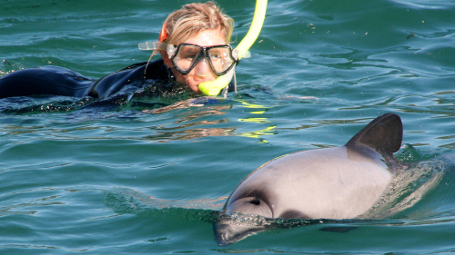Full-Day Dolphin Swimming Tour by Canterbury Leisure Tours