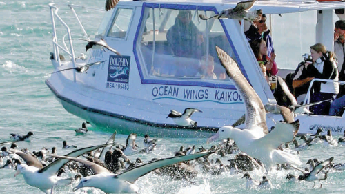Full-Day Albatross Tour in Kaikoura by Canterbury Leisure Tours