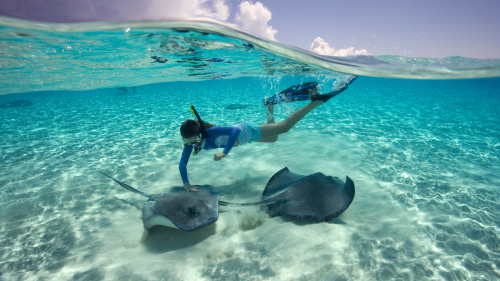Swim & Snorkel with Stingrays