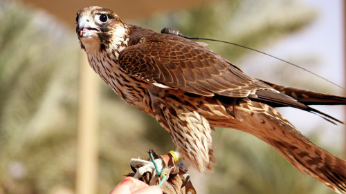 Heritage Wildlife Safari & Falconry Experience