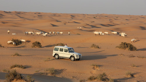 Luxury Conservation Drive with Refreshments at Al Maha Desert Resort