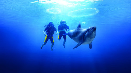 Dolphin Bay Scuba Dive at Atlantis, The Palm
