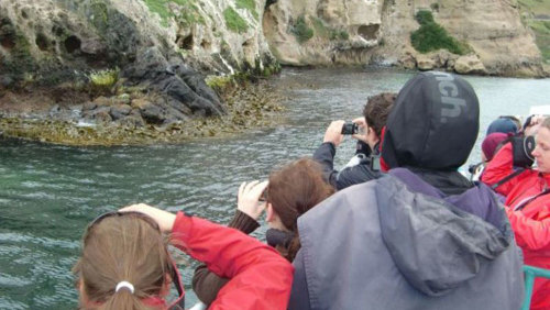 Otago Peninsula Wildlife Cruise by Monarch Wildlife Cruises