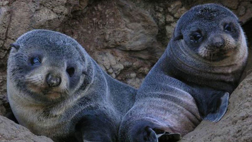 Otago Peninsula Wildlife Half-Day Tour by Monarch Wildlife Cruises