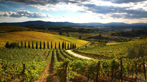 Small-Group Chianti & Villages Full-Day Tour with Lunch