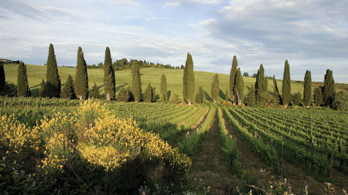 Tuscany in 1 Day with Lunch & Dinner by My Tour
