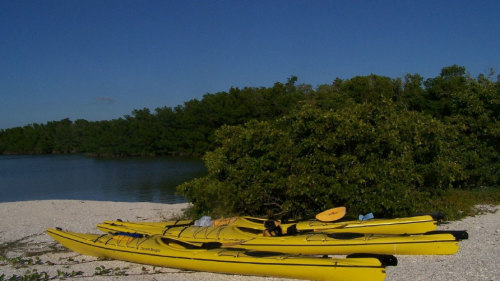 Everglades Mangrove Kayak Eco Tour