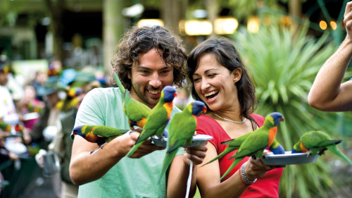 Currumbin Wildlife Sanctuary Day Admission