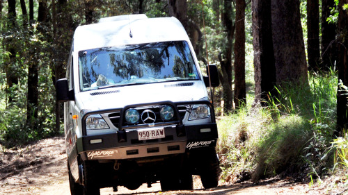 Hinterland Rainforest 4-Wheel Drive Day Tour