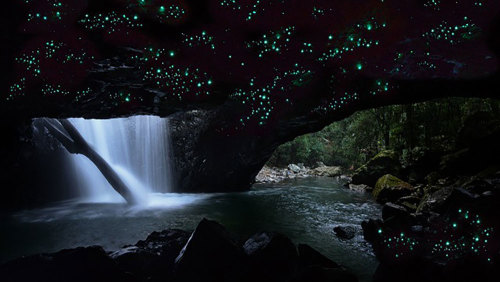 Springbrook National Park & Glowworm Night Tour by Tour Gold Coast