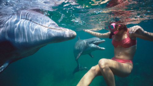 Dolphin Quest: Dolphin Swim & Encounter Deluxe