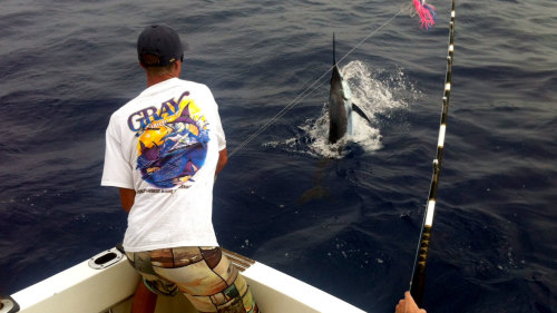 Tropical Sportfishing on the Camelot