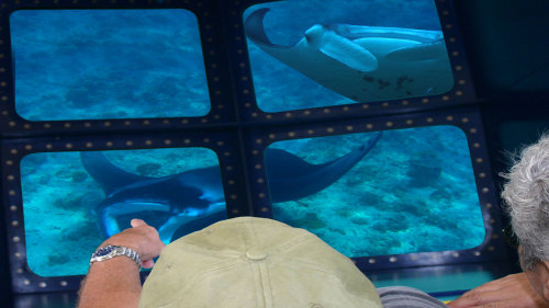 Glass-Bottom Boat Manta Ray Encounter