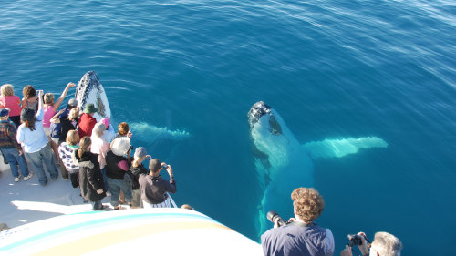 Half-Day Whale-Watching Tour by Whalesong Cruises