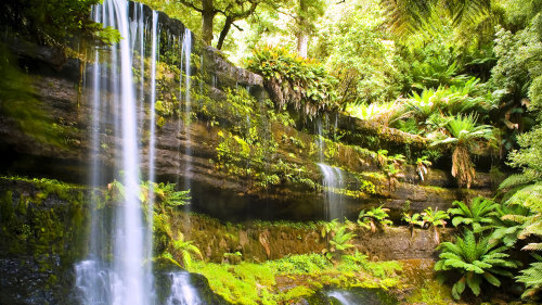 Mount Field National Park & Russell Falls Tour