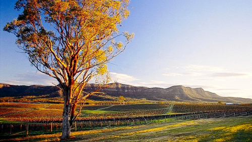 Hunter Valley Small-Group Day Tour