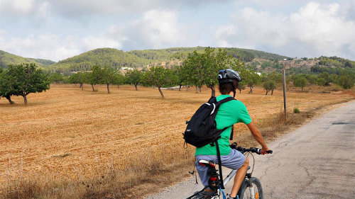 Bicycle Tour between Santa Eulalia & Santa Gertrudis with a Local