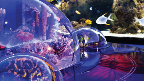 Istanbul Aquarium & Aqua Florya Shopping Mall