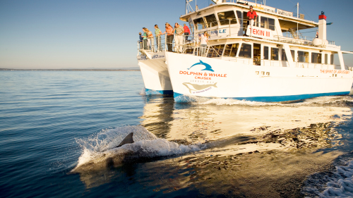 Jervis Bay Full-Day Tour by Colourful Trips
