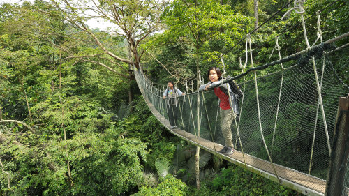 Private Rainforest and Canopy Walk Tour by Tour & Incentive Travel