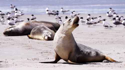 Kangaroo Island 2-Day Tour