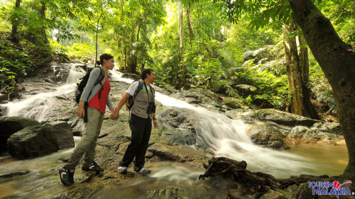 Tropical Rainforest Nature Half-Day Tour