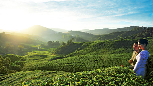 2-Day Cameron Highlands Private Tour with Overnight Stay
