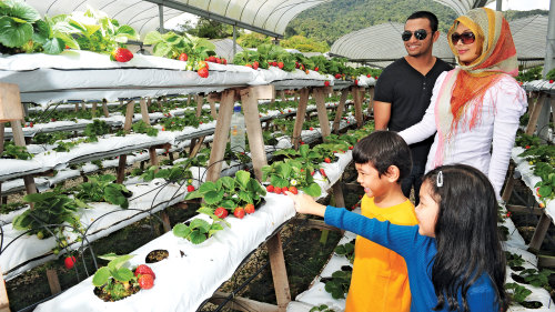 2-Day Cameron Highlands & Penang Private Tour with Overnight Stay