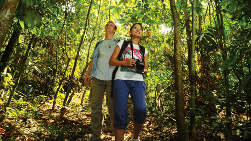 Private 3-Day 2-Night Taman Negara Excursion